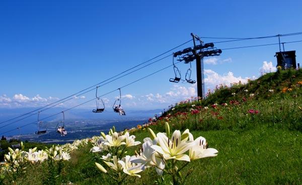 びわこ函館山ゆり園